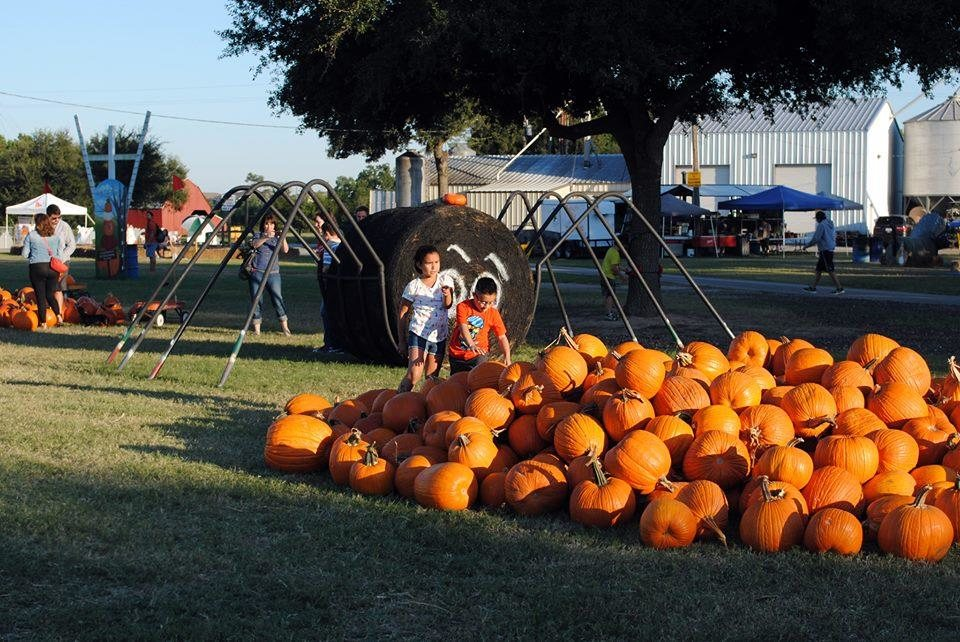 Image result for old time christmas tree farm pumpkin patch